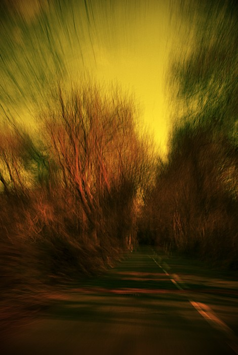 photoblog image Trees sped by...